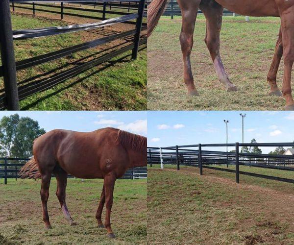 Horserail Sécurité du cheval
