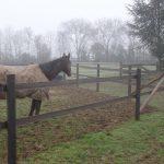 Horserail 2W marron